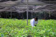 Production de plants