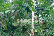 Forêt classée de la Davo